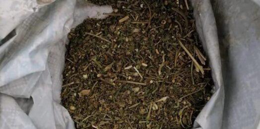 """""""Любопытство"""" погубило: в Одесской области у жителя Сараты изъяли наркотики и боеприпасы"""