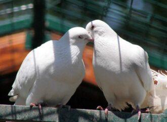 В Одессе появился мини-зоопарк