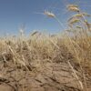 Чрезвычайная ситуация: одесские фермеры понесли миллиардные убытки