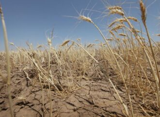 Государство заплатит пострадавшим от засухи фермерам Одесчины по 5 тысяч за гектар