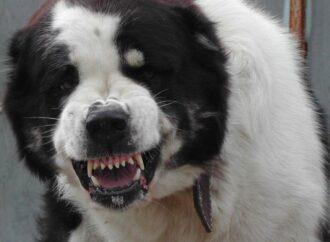 Наказан владелец собак из Санжейки, которые разорвали женщину в Одесской области
