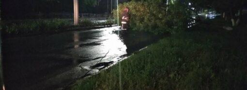 На Одещині через непогоду обвалилося дерево і перекрило проїжджу частину