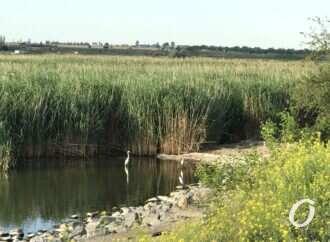 На Одещині троє підлітків застрягли у болоті