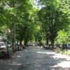 Приморский бульвар и парки под ним: дневной вояж в разгар жаркого одесского сезона-2020 (фото)