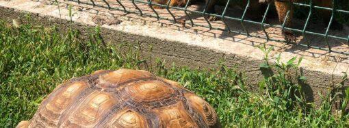 Одесский зоопарк запечатлел забавный момент общения носух и черепахи (фото)