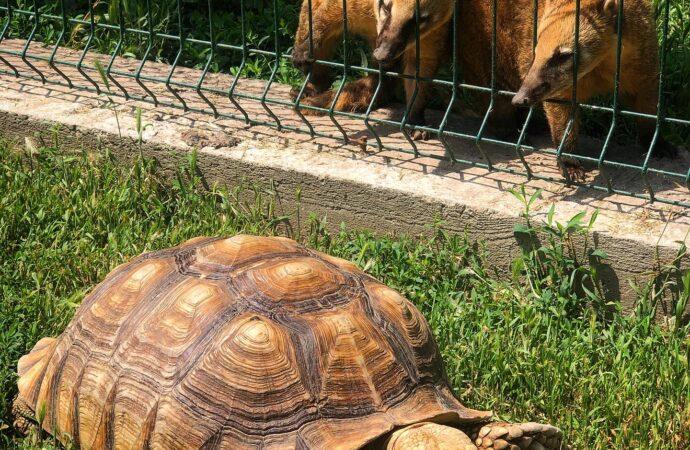"""День смеха: из Одесского зоопарка """"сбежали"""" черепахи (видео)"""