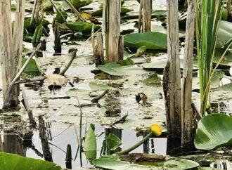 Озерам дельты Дуная вернули природный водообмен: в чем польза уникального проекта экологов? (фото)