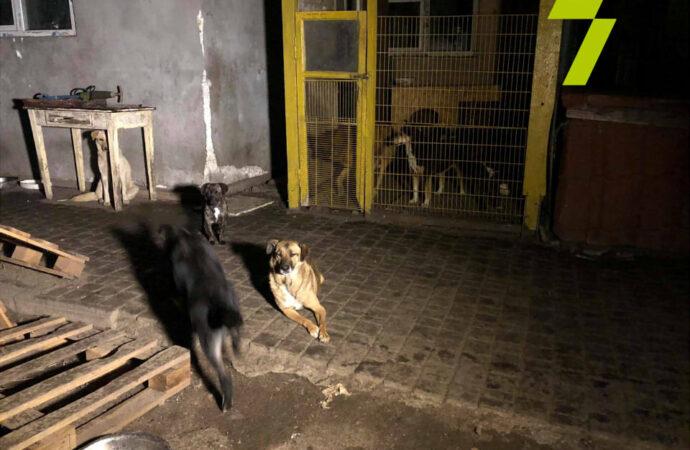 """Рятувальники показали, як ліквідовували пожежу у притулку для тварин """"Ковчег"""" (відео)"""