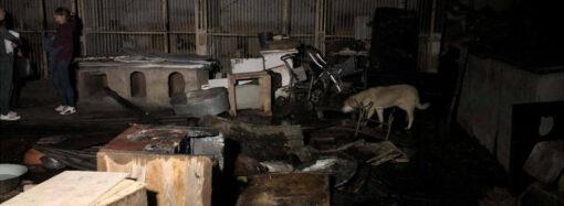 В Одесі горів притулок для тварин: котів та собак врятував випадковий перехожий (фото)