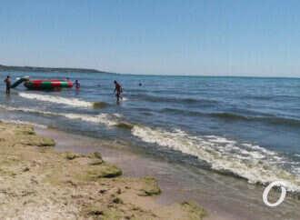 Мало людей и много водорослей: как отдыхается на пляже Лузановка?