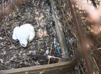 Впервые в Украине: в Одесском зоопарке вылупился птенец редкой птицы (фото)