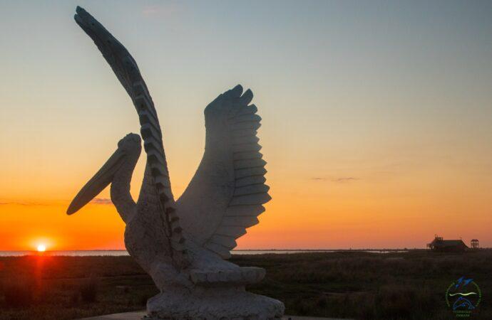 Эколог показал завораживающее видео с пеликанами в Одесской области