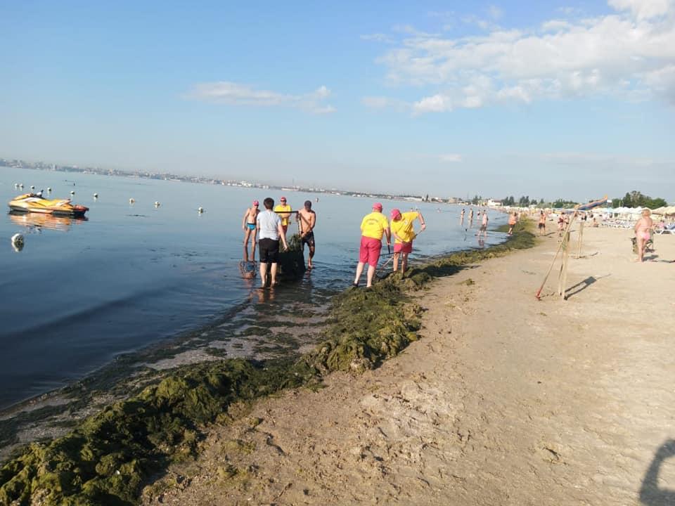 уборка водоростей на пляже