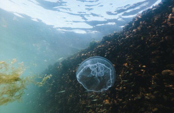 Температура морской воды в Одессе 9 августа