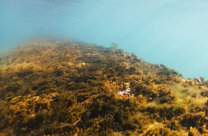 Температура морской воды в Одессе: идти ли на пляж 25 июля?