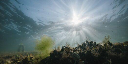 Температура морской воды в Одессе: стоит ли идти на пляж 8 августа?