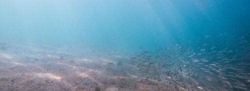 Температура морской воды в Одессе: ожидать ли сегодня теплого моря?