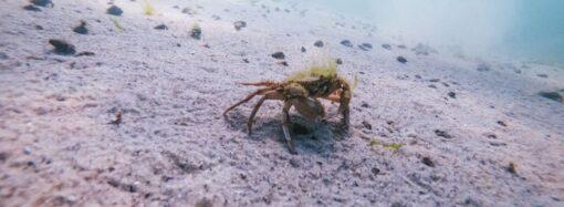 Хрупкая красота: как одесский фотограф снимает обитателей морского дна?