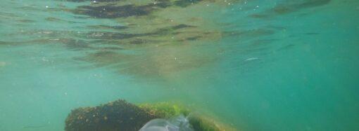 Температура морской воды в Одессе: идти ли на пляж 2 августа?