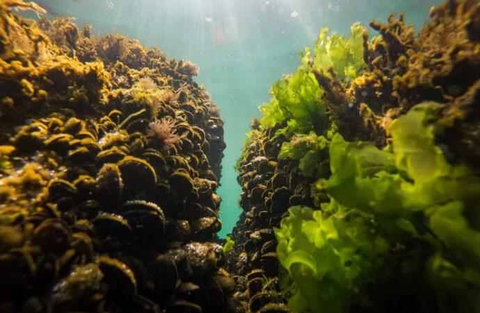Температура морской воды в Одессе: идти ли на пляж 29 июля