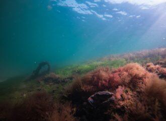 Температура морской воды в Одессе: идти ли на пляж 26 июля?