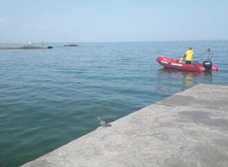 В Одесі на 10 ст. Великого Фонтану рятують дельфінів, які не можуть переплисти через хвилеріз