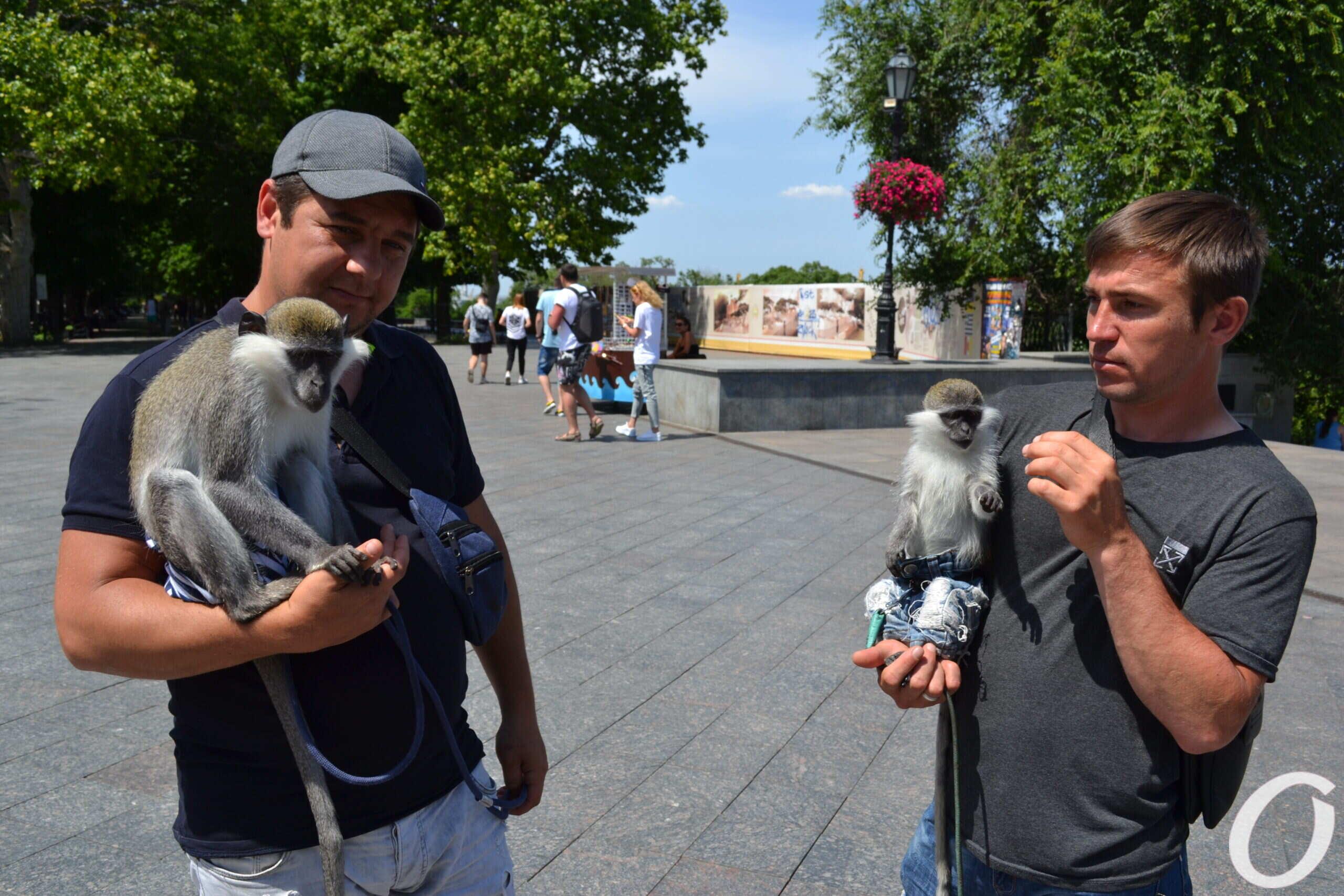 Живонтые на Приморском бульваре