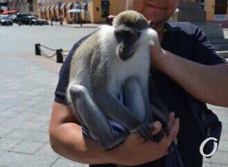 В Одессе не будет фотозон с живыми животными и птицами, – вице-мэр