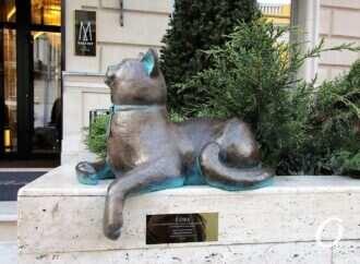 Одесско-французской кошке Софе вернули кулон и приодели в честь праздника (фото)