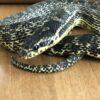 Без паники: как вести себя при встрече со змеей в Одесской области