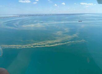 Вода в Черном море стала как кисель, купаться не рекомендуют (фото)