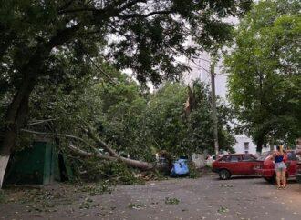 Пострадавшие люди и упавшие деревья: в Одессе ликвидируют последствия урагана