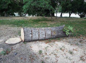Спилили деревья, высушили пруд: одесситы требуют привести в порядок Дюковский парк