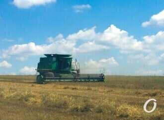 В Одесской области зафиксировали самый низкий урожай пшеницы в Украине