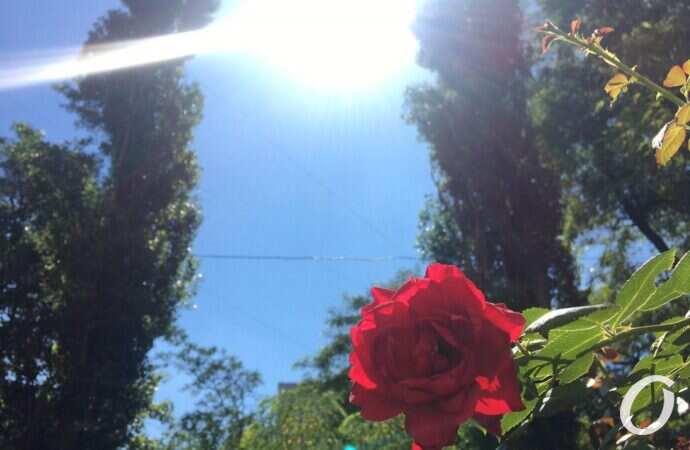 Погода в Одесі на 29 липня. У місті цього дня буде спекотно