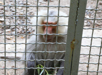 З Одеського зоопарку втекли три мавпи: як їх намагалися впіймати? (відео)