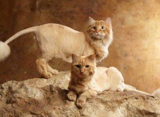 Где в Одессе постричь кошку на лето?