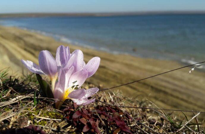 Розовые фламинго и украденные подснежники: как сегодня живет ландшафтный парк «Тилигульский»?