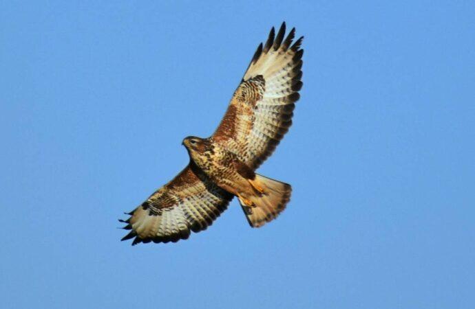 Щаслива історія: на Одещині випустили на волю птахів, яких знайшли напівживими у вуличних фотографів (відео)