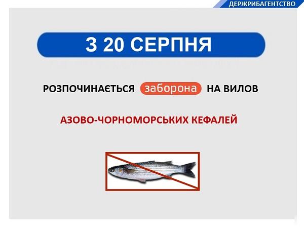 Госрыбагентство запретило ловить черноморскую кефаль
