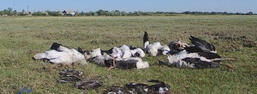 Град убил сотни птиц в национальном парке в Одесской области (фото)