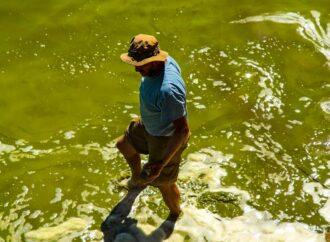 На Одещині лиман Сасик зацвів отруйними синьо-зеленими водоростями