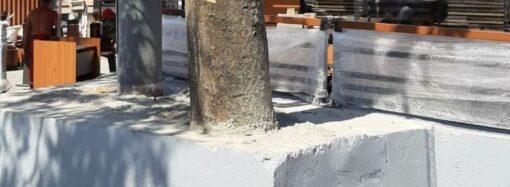 В Одессе появился варварский «памятник»: живое дерево закатали в бетон (фото)