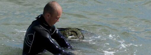 Як у Чорноморську знешкоджували морську міну? (відео)