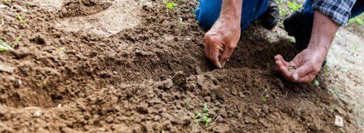 Дачные советы: что посадить и посеять в августе?
