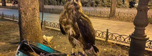 Спасение птицы и угроза от распила Delfi: коротко о главных новостях 4 августа