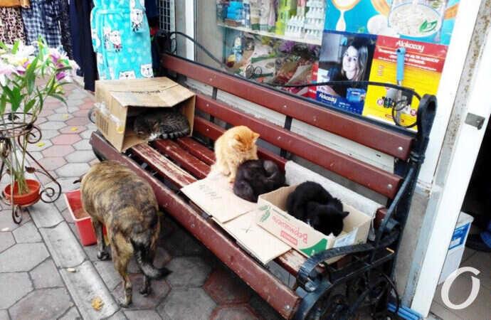 Пушистое сокровище города: хозяева одесских улиц и дворов