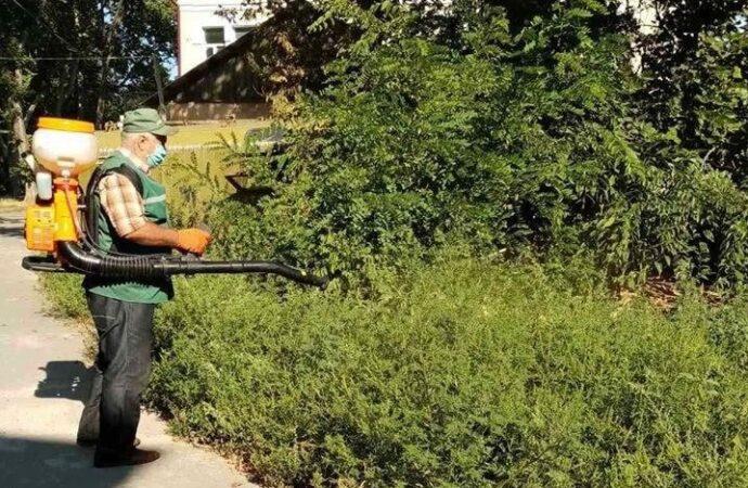 На территории Еврейской больницы уничтожили целую плантацию амброзии