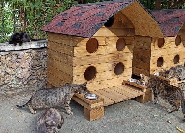 Коттеджи для одесских котов: кому небезразлична жизнь бездомных животных?