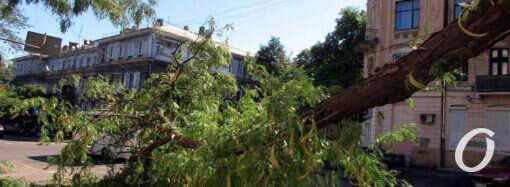 На Торговой снова рухнула огромная ветка (фото)